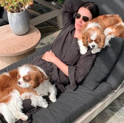 A atriz Courteney Cox e seus dois cachorrinhos.