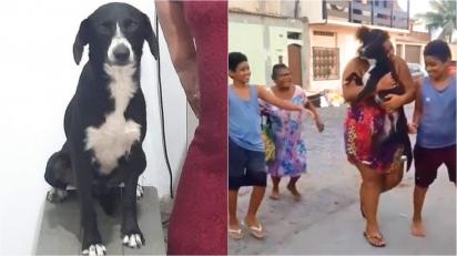 Mulher faz apelo aos internautas para ajudarem a encontrar o seu cachorro.