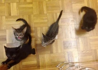 Uma ninhada de quatro gatinhos trouxe novamente alegria para a mamãe felina.
