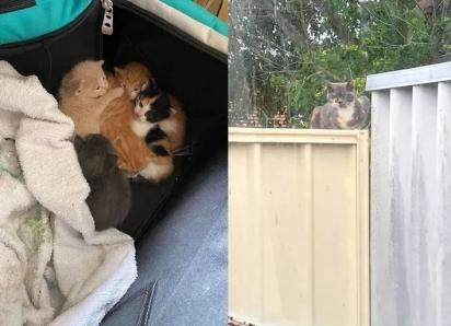 Para proteger seus filhotes a gatinha escondeu a ninhada dentro da caixa de ferramentas no pátio da casa de uma família.