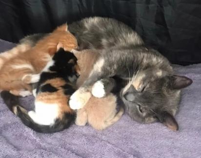 A felina muito protetora não sai de perto dos seus filhotes.