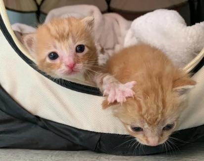 Os gatinhos por algum motivo foram abandonados pela sua mãe.