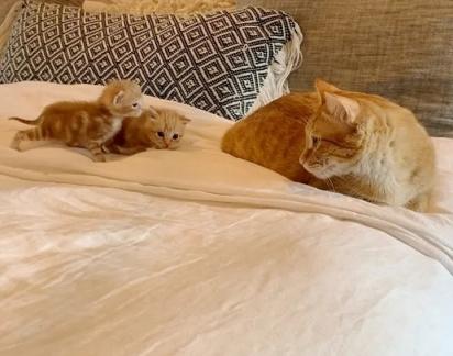 Os gatinhos muito curiosos logo fizeram amizade com um dos felinos da casa.