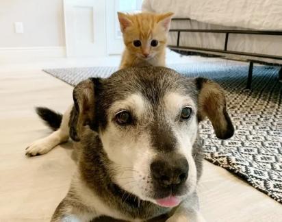 O cão Jack, não resistiu aos encantos dos gatinhos e fez amizade com a duplinha.