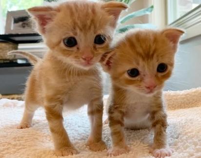 Os dois gatinhos são muito espertos e encantadores.