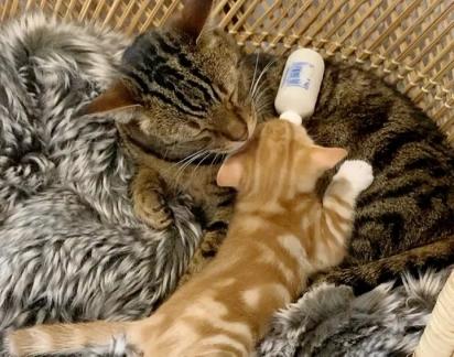 O gato Rigby também se rendeu aos encantos da duplinha.