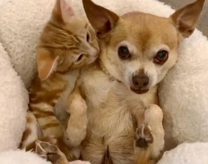 Na verdade todos os animais da casa se renderam a fofurice dos gatinhos.