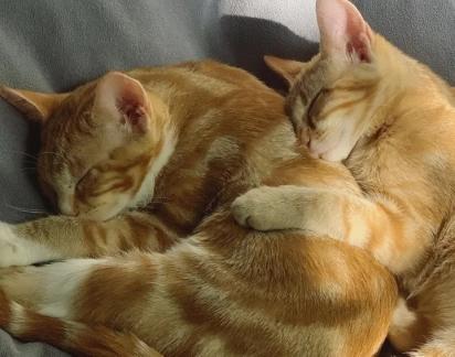 Os dois irmãos cresceram e ficaram ainda mais lindos.