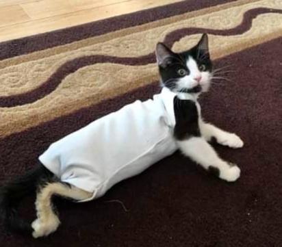 Com muito cuidado e amor o gatinho tem recuperado levemente o movimento das patas traseiras.