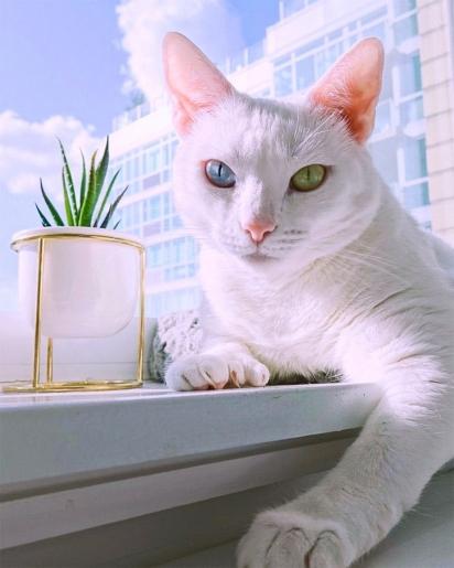 Sansa é uma gatinha branca de seis anos que vive com a sua família em Nova York.