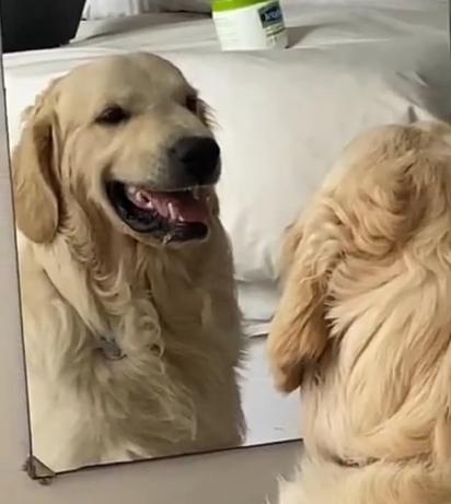"""""""Quem é o bom garoto? Ah é, sou eu!"""""""