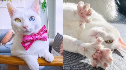 Gatinha é abandonada apenas por ter olhos de cores diferentes e alguns dedinhos extras.
