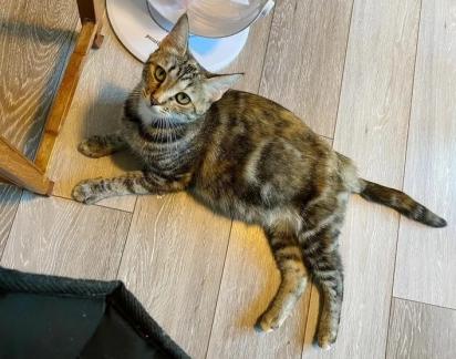 A gatinha foi encontrada vagando pelas ruas de Lake Chelan, Washington (EUA).