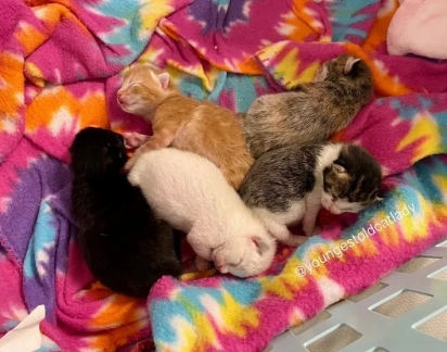 Ao perceber que estava grávida, o homem que estava cuidando da gatinha entrou em contato com a Ashley Morrison que trabalha com resgate de animais.