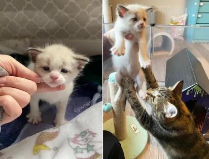 A gatinha deu à luz em um ambiente acolhedor e tem dado o melhor de si para cuidar dos seus filhotes.