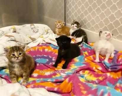 Os gatinhos, agora maiores, adoram brincar e explorar o ambiente em que vivem.