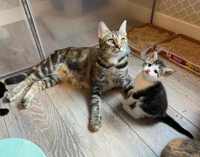 Quando os gatinhos estiverem maiores serão castrados e encaminhados para adoção.