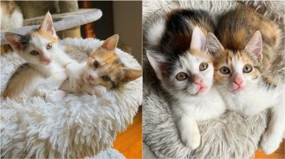 Irmãs gatas são tão inseparáveis que convencem família a adotar as duas.