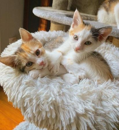 As gatas CC e Cara juntinhas.