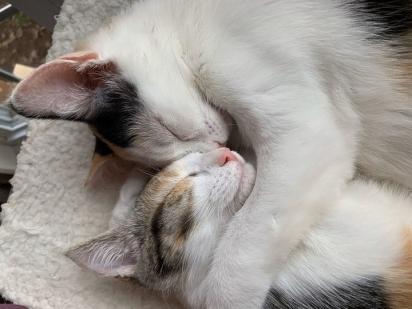 Elas dormem abraçadas sempre.
