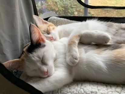Eu nem tenho mais motivo para postar foto delas dormindo, mas a fofura delas me ganha.