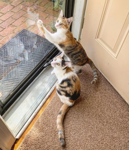 Segundo Kelly, elas gostavam de ficar na porta da frente, acenando para os vizinhos e vendo o dia passar.