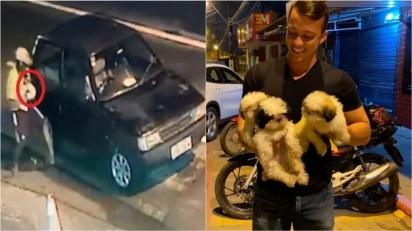 Cães shih tzus furtados de pet shop são recuperados e devolvidos aos donos.
