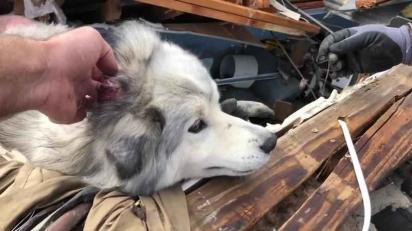 O cãozinho foi separado da família ao ser arrastado pelo vento durante tempestade.