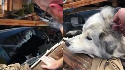 Cachorro é encontrado ileso sob escombros de edifício caído após passagem de tornado nos EUA.