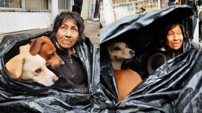 Usando sacos plásticos, mulher cria barraca para proteger a si e seus cães de inverno mexicano.
