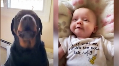 Cachorro rottweiler mostra para bebê como dizer mamãe.