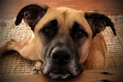 A cadela Frankie sofre de uma doença chamada Addison e precisa de medicação diária.