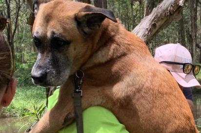 Frankie foi encontrada no mato pela cadela labradora.