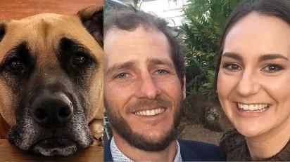 Comunidade se une para procurar e ajudar cadela de casal vítima de acidente de trânsito.