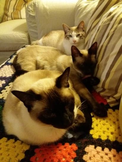 Os gatinhos de Meli são lindos.