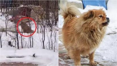 Cãozinho leal espera o dono no trabalho todos os dias cinco anos desde a sua morte.