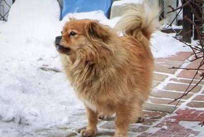 Há cinco anos o cãozinho perdeu o seu dono e desde então tem esperado por ele no seu antigo local de trabalho.