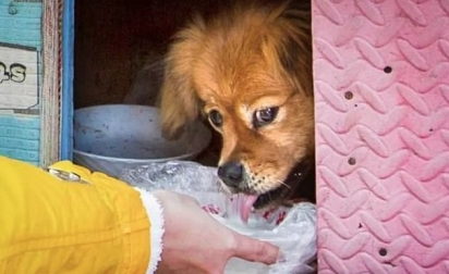 O cachorrinho é conhecido na vizinhança, tentaram adotá-lo, mas ele sempre volta pro local a espera do seu falecido dono. Ele é muito amado por todos.