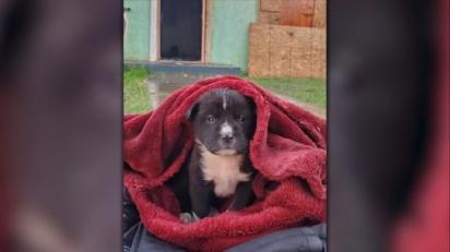 A cadelinha foi cruelmente abandona numa casa em chamas presa dentro de uma mochila.