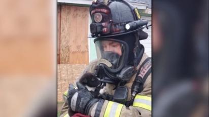 A cadelinha escapou de um fim trágico graças a ação rápida dos bombeiros de Fresno, Califórnia.