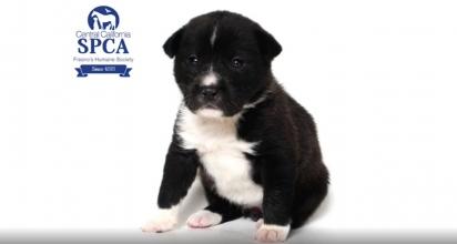 A cadelinha Smokey ficará em observação por cinco semanas para então ser colocada para adoção.