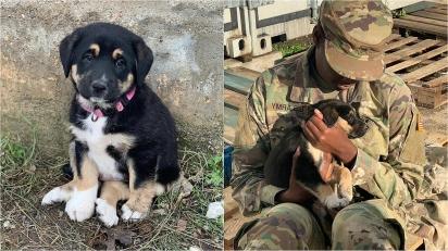 Soldado americana adota filhote de cachorro durante missão em outro país e agora pede ajuda para trazê-la aos Estados Unidos