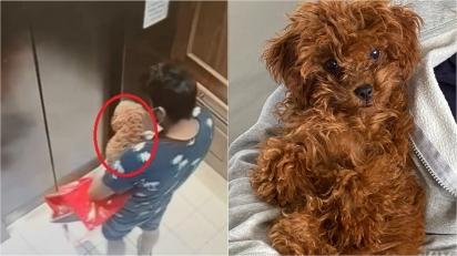 Homem se passa por entregador de comida e aproveita para roubar cadela poodle em condomínio.