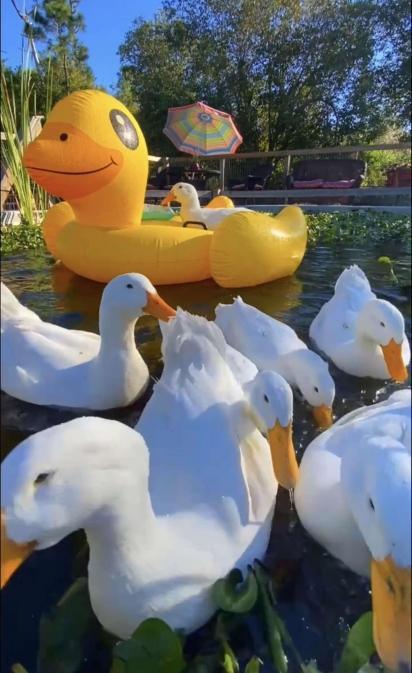 A patinha Keeper aproveitando o dia de sol com a sua família.