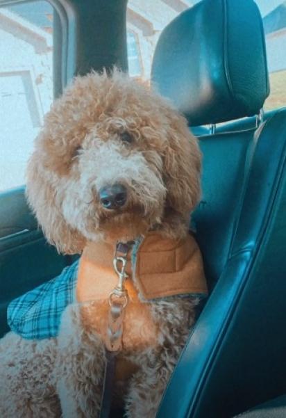 A cachorrinha antes de ir no pet shop.
