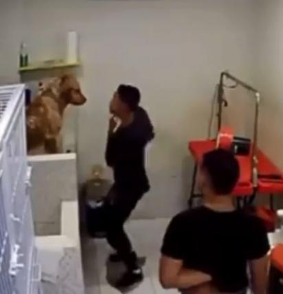 O jovem dança alegremente com o cachorro golden retriever enquanto o banha.
