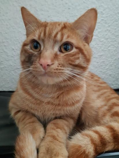 O gatinho desapareceu por 3 semanas, sendo encontrado a 38 km de distância de casa.