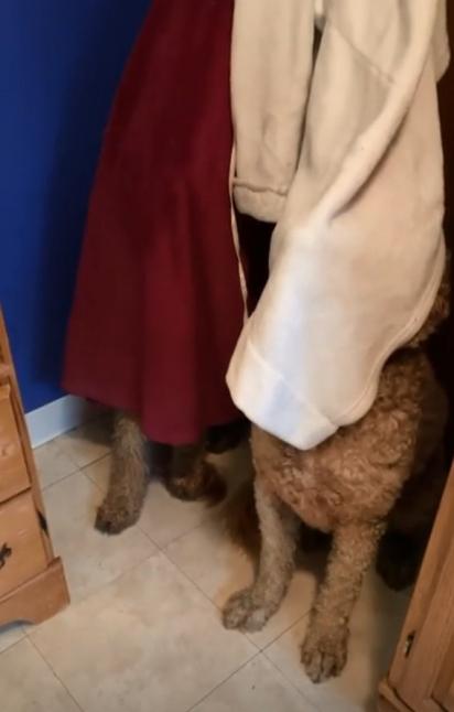 Os dois cachorros tentaram se esconder atrás de roupões.