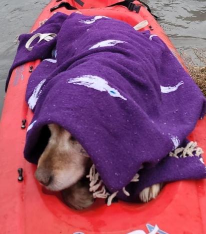 A comunidade de Lopez Island, Washington (EUA) se uniu para encontrar o cachorro.