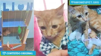 Gato que não era gato dá à luz após dona comprar tudo azul.